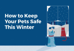 Winter Pet Care Tips: How to Keep Your Pets Safe in Colder Months