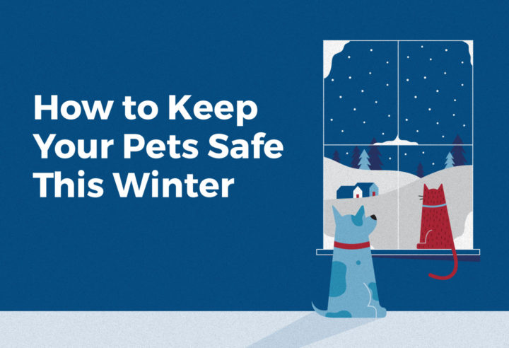 How to keep your pets safe this winter graphic